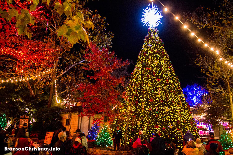 Sdc Christmas Tree Square